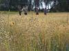 Odlarträff, sortförsök 15.8.2012