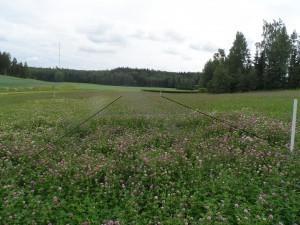 Klöver-gräsblandningen 1.7. Samma blandning som använts i denna ruta har även såtts på resten av fältet.