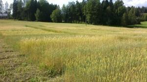 Odlarträff2012-08-15-1238