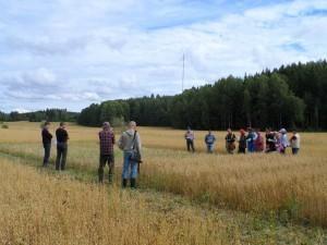 Fältvandring vid Ekosortförsöken i Gammelby 13.8.