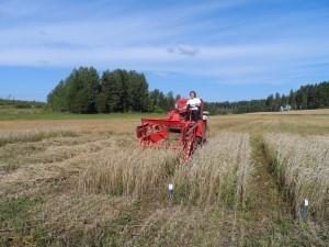 Soliga förhållanden då årets ekorutor skördades i Gammelby