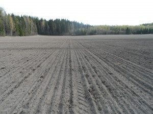 Nu är fältet klart, nu är det bara att vänta på att något ska börja hända!