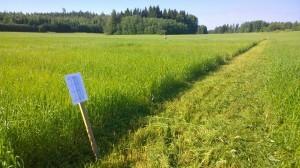 Vi satte upp kartor över försöket, så att man när som helst ska kunna besöka fältet och bekanta sig med sorterna.