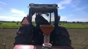 Kettil kör traktorn och i bakgrunden övervakar grannens mjölkkor vårt arbete.