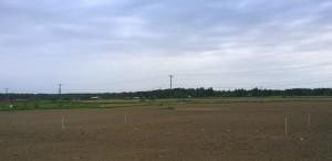 Här är då årets ekogödslingsförsök, i bakgrunden skymtar de vita hörnpinnar som omringar ekosortförsöket. Bilden tagen från Påvalsbyvägen