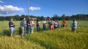 Torbjörn står i mitten och berättar om sorterna som ingår i årets kornförsök.
