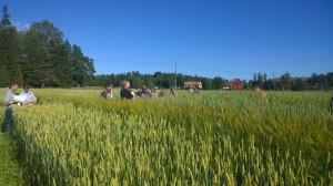 Nu är vi kommit till de svenska demo-rutorna. De är riktigt fina just nu, och långa!