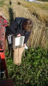 NSLs rådgivare Bodil assisterar tröskarkusken från marken