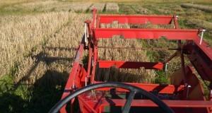 Tröskning av korn